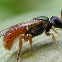 Giant Chromosomes: Fruit Fly DNA and You