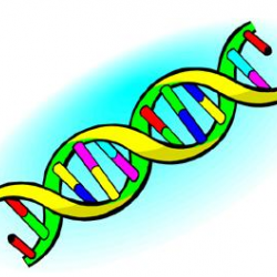 DNA Extraction: Look at your genes!