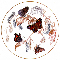 Butterfly Symmetry Painting