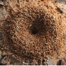 Make Your Own Ant Farm