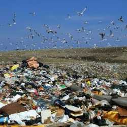 Pollution and Waste Audit: Making Responsible Decisions about Waste