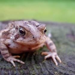 Toad Abode: Creating a Home for a Backyard Toad