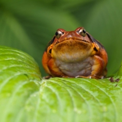 Soak It Up: Understanding Amphibian Permeability