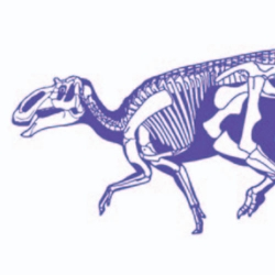 Dinosaur Skull and Body Length Predictions