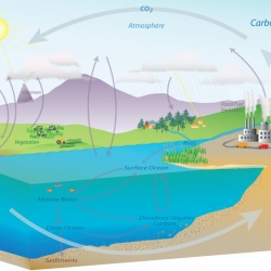 The Carbon Cycle and its Role in Climate Change: Activity 1