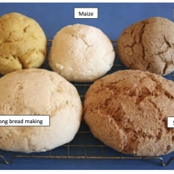 Wheat Evolution: Dough Rising